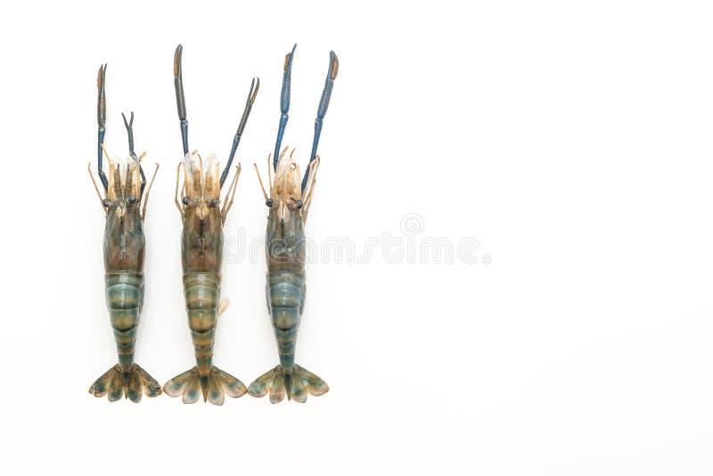 Φρέσκες γαρίδες στο λευκό στοκ εικόνες
