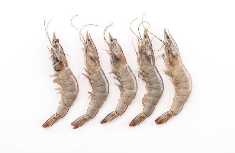 Φρέσκες γαρίδες/γαρίδα στοκ φωτογραφία