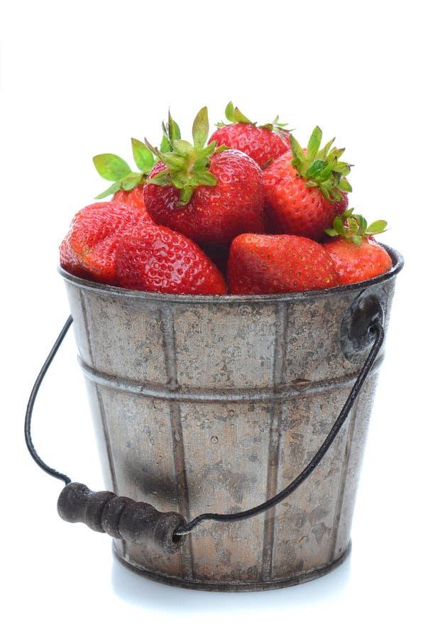 φρέσκες επιλεγμένες κάδος φράουλες στοκ εικόνες
