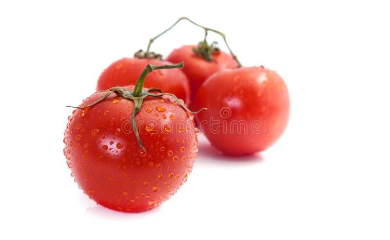 Φρέσκες ντομάτες στον κλάδο με τις πτώσεις νερού δροσιάς στοκ εικόνα