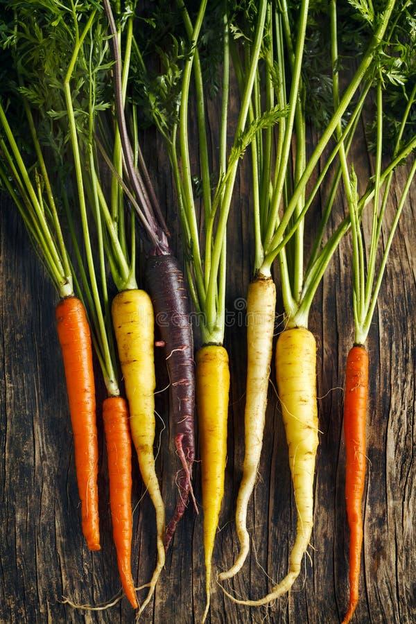 Φρέσκες οργανικές ποικιλίες καρότων οικογενειακών κειμηλίων της πορφύρας, κίτρινες, πορτοκάλι στοκ φωτογραφία