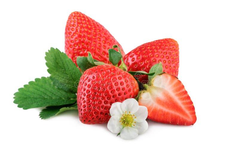 Φρέσκες οργανικές φράουλες με το φύλλο και το λουλούδι στο λευκό στοκ φωτογραφίες με δικαίωμα ελεύθερης χρήσης