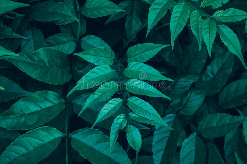 Φρέσκες πράσινες άγριες δασικές εγκαταστάσεις Μεθύστακας φύλλων φτερών Βοτανικό υπόβαθρο φύσης Αφίσα ταπετσαριών Organic Cosmetic στοκ εικόνες