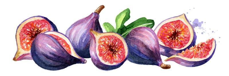 Φρέσκες ώριμες πορφυρές φρούτα και φέτες σύκων με τα φύλλα, συρμένη χέρι οριζόντια απεικόνιση Watercolor που απομονώνεται στο άσπ στοκ φωτογραφίες με δικαίωμα ελεύθερης χρήσης