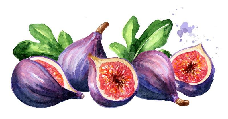 Φρέσκες ώριμες πορφυρές φρούτα και φέτες σύκων με τα φύλλα, συρμένη χέρι απεικόνιση Watercolor που απομονώνεται στο άσπρο υπόβαθρ στοκ εικόνα