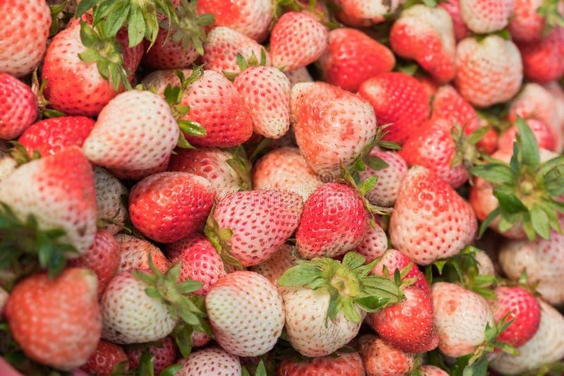 φρέσκες ώριμες φράουλες στοκ εικόνα