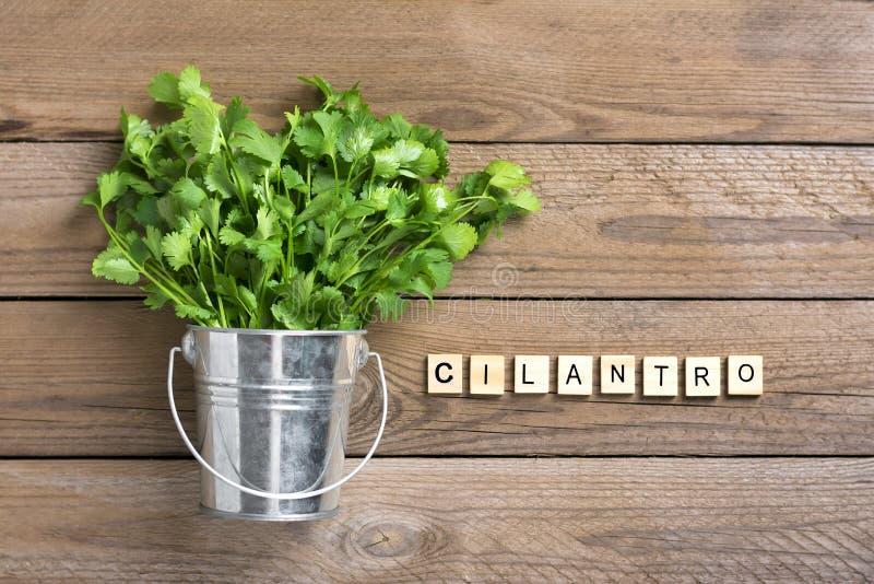 Φρέσκια ακατέργαστη δέσμη cilantro στον κάδο μετάλλων στο ξύλινο υπόβαθρο στοκ εικόνα με δικαίωμα ελεύθερης χρήσης