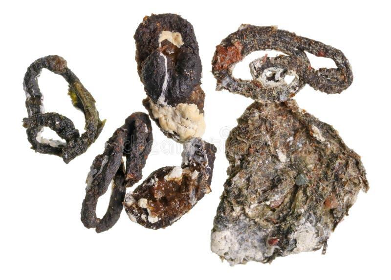 Φρέσκια απομονωμένη μακροεντολή περιστεριών πουλιών μειώσεις στοκ φωτογραφία με δικαίωμα ελεύθερης χρήσης