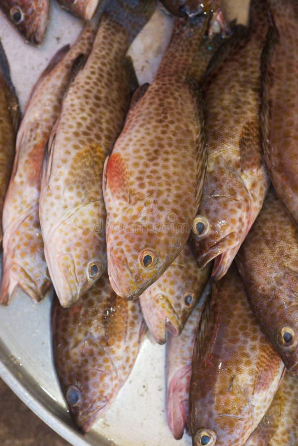 Φρέσκια επισημασμένη grouper θάλασσας κάθετη φωτογραφία στοκ φωτογραφία με δικαίωμα ελεύθερης χρήσης
