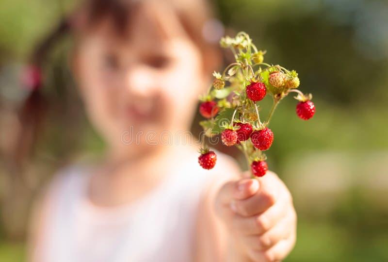 Φρέσκια κινηματογράφηση σε πρώτο πλάνο άγριων φραουλών Φράουλα εκμετάλλευσης μικρών κοριτσιών υπό εξέταση στοκ φωτογραφίες