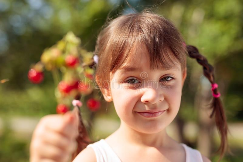 Φρέσκια κινηματογράφηση σε πρώτο πλάνο άγριων φραουλών Φράουλα εκμετάλλευσης μικρών κοριτσιών υπό εξέταση στοκ εικόνα με δικαίωμα ελεύθερης χρήσης
