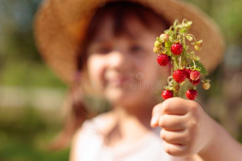 Φρέσκια κινηματογράφηση σε πρώτο πλάνο άγριων φραουλών Φράουλα εκμετάλλευσης μικρών κοριτσιών υπό εξέταση στοκ φωτογραφία