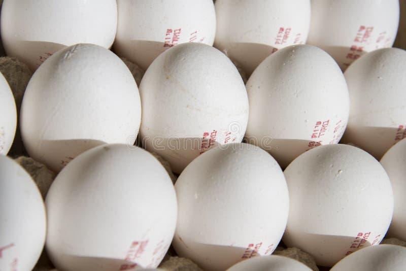 φρέσκια ομάδα αυγών στοκ εικόνες