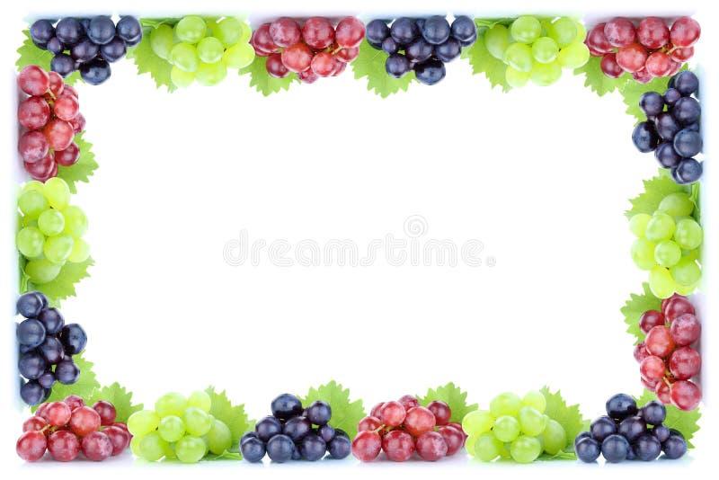 Φρέσκια οργανική πτώση φθινοπώρου πλαισίων φρούτων φρούτων σταφυλιών copyspace ομο διανυσματική απεικόνιση