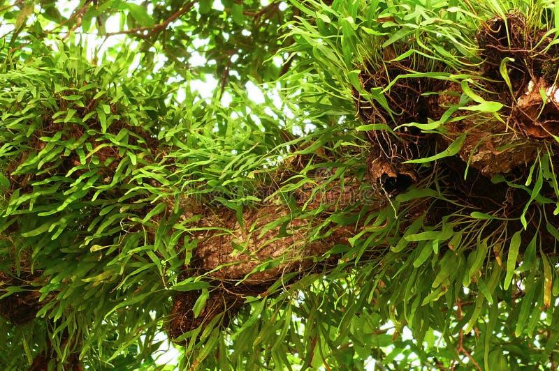 Φρέσκια ορχιδέα ζωντανή στο δέντρο στοκ φωτογραφίες