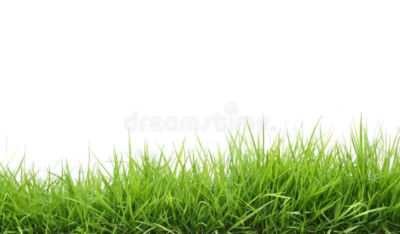 φρέσκια πράσινη άνοιξη χλόης στοκ εικόνα