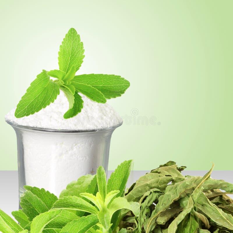 Φρέσκια πράσινη και ξηρά σκόνη Stevia και αποσπασμάτων στο πράσινο υπόβαθρο στοκ φωτογραφίες