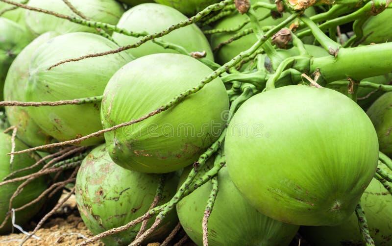 Φρέσκια πράσινη ομάδα καρύδων για τα ακατέργαστα τρόφιμα και το ποτό στοκ φωτογραφία
