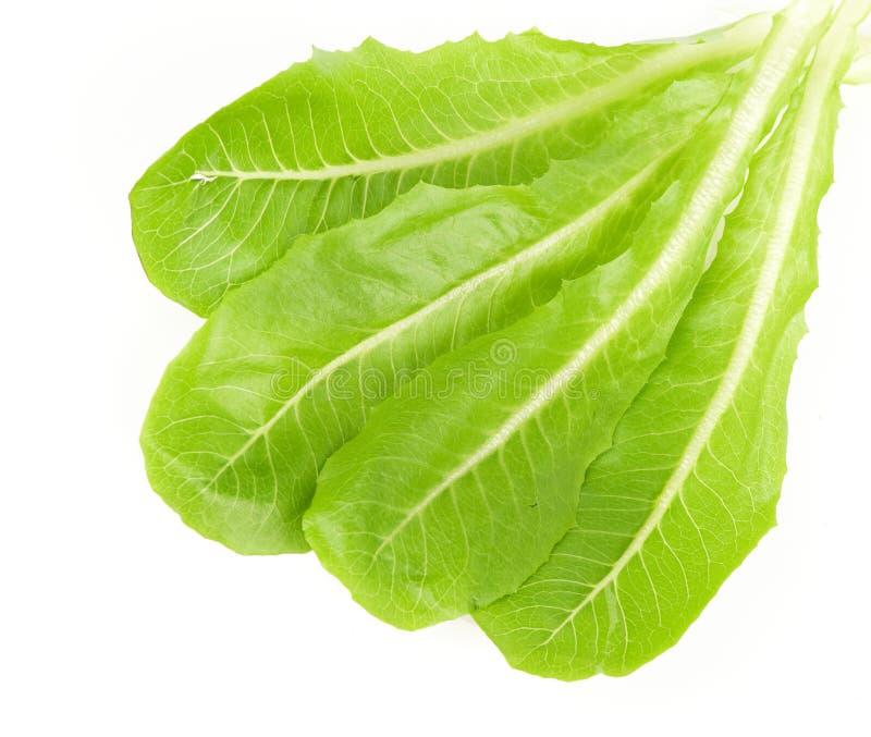 φρέσκια πράσινη σαλάτα φύλλ στοκ φωτογραφίες