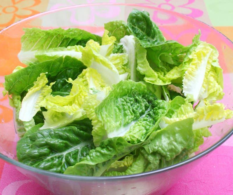 Φρέσκια πράσινη σαλάτα στοκ φωτογραφίες με δικαίωμα ελεύθερης χρήσης