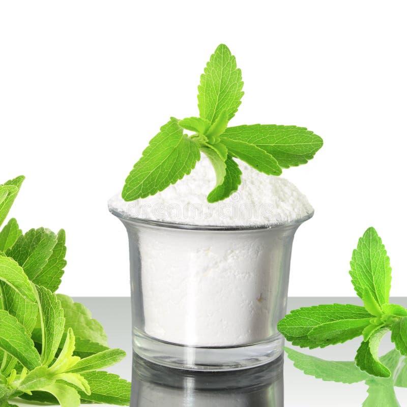 Φρέσκια πράσινη σκόνη Stevia και αποσπασμάτων στο άσπρο υπόβαθρο στοκ εικόνες