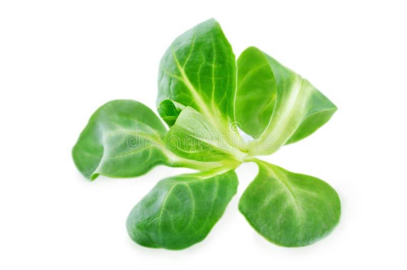 φρέσκια σαλάτα καλαμποκιού στοκ φωτογραφία με δικαίωμα ελεύθερης χρήσης