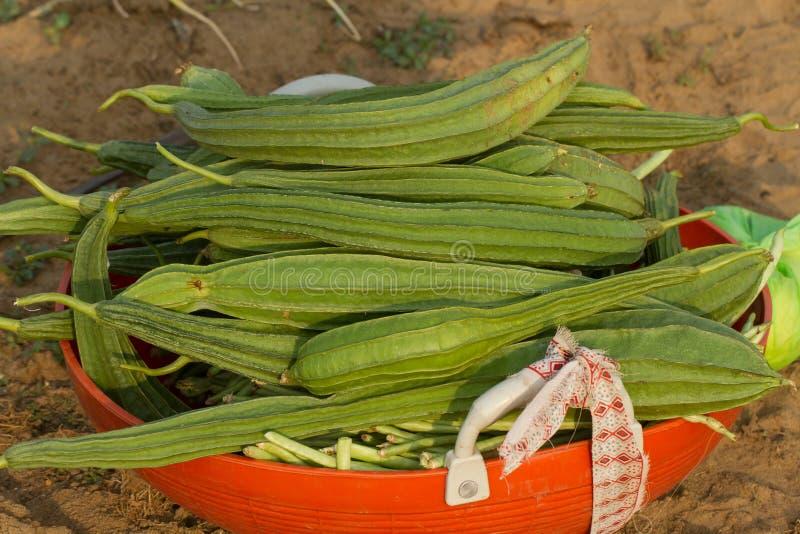 Φρέσκια συγκομιδή του luff Χαρακτηριστικός κήπος στη νότια Ινδία στοκ φωτογραφίες