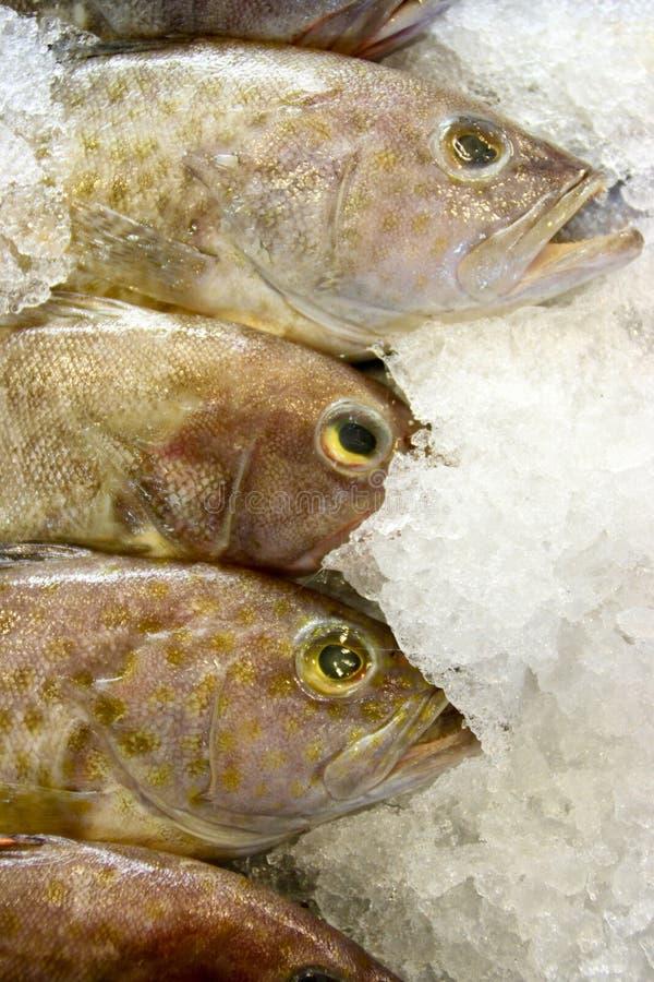 φρέσκια grouper αγορά στοκ εικόνα