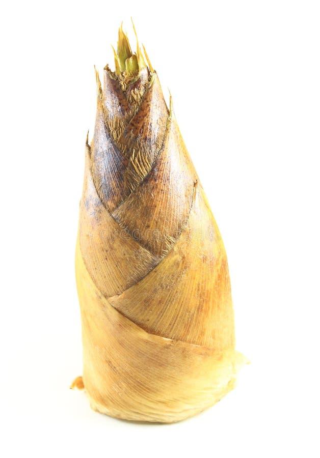 φρέσκοι βλαστοί μπαμπού στοκ εικόνα