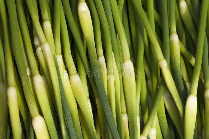 Φρέσκοι βλαστοί σκόρδου στοκ φωτογραφία