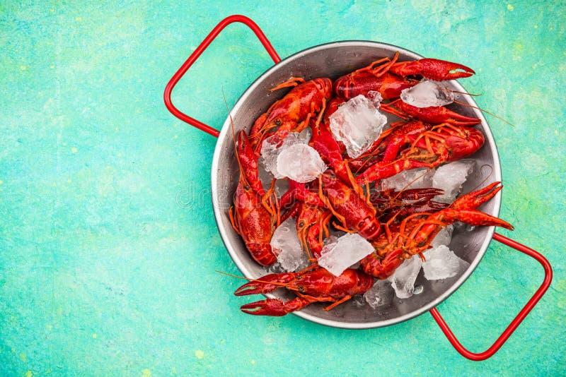 Φρέσκοι κόκκινοι αστακοί με τους κύβους πάγου στην κατσαρόλλα, διάστημα αντιγράφων στοκ φωτογραφίες με δικαίωμα ελεύθερης χρήσης