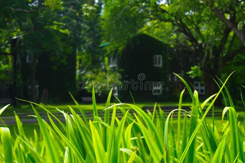 Φρέσκοι πράσινοι τομείς χλόης σε ένα φυσικό υπόβαθρο στοκ εικόνα με δικαίωμα ελεύθερης χρήσης