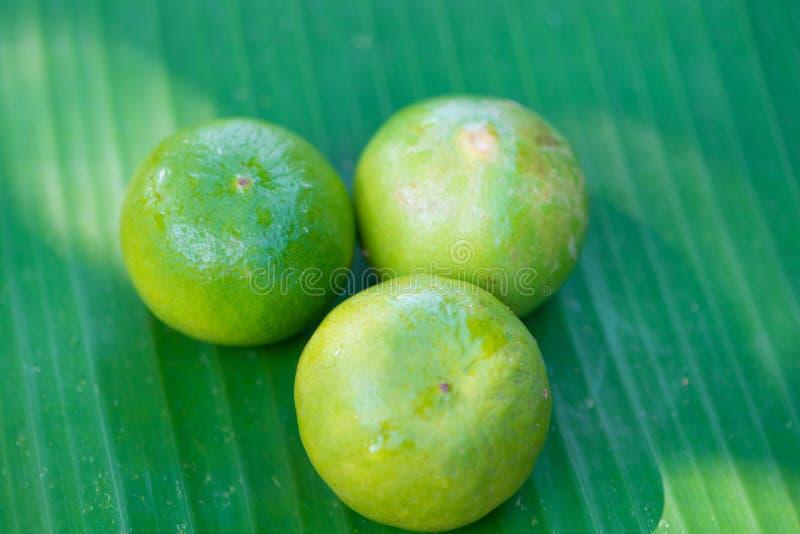 Φρέσκος ασβέστης στο πράσινο φύλλο μπανανών στοκ εικόνες