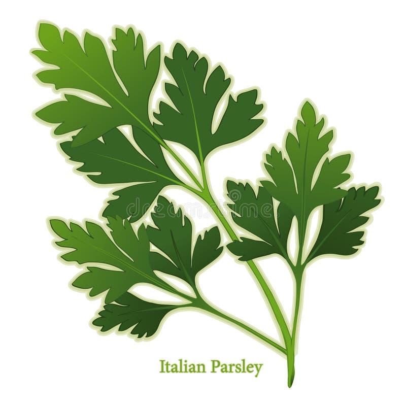 φρέσκος ιταλικός μαϊντανό&sigm διανυσματική απεικόνιση