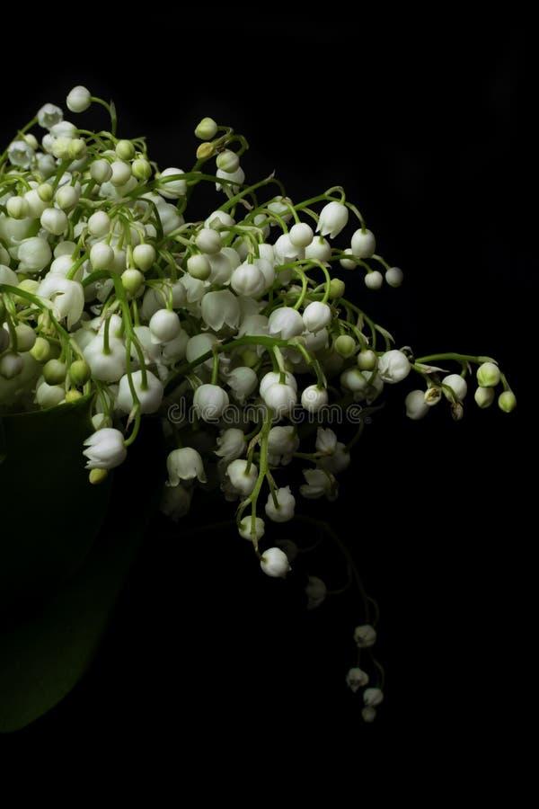 Φρέσκος κρίνος λουλουδιών άνοιξη ευώδης της κοιλάδας σε ένα μαύρο υπόβαθρο Φωτεινό και juicy υπόβαθρο του λεπτού κρίνου της κοιλά στοκ εικόνες