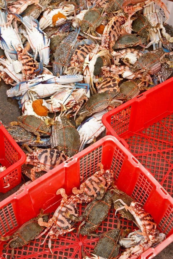 Download φρέσκος λιμένας αλιείας & στοκ εικόνα. εικόνα από αλιεία - 17056781