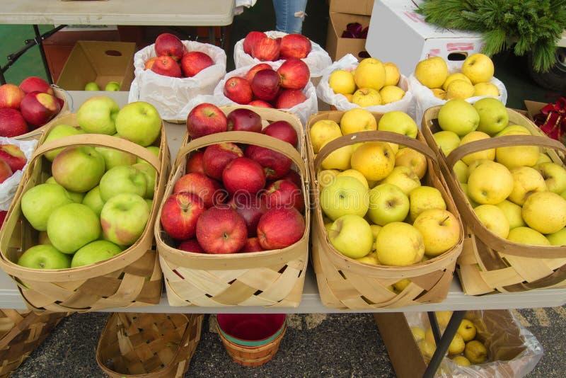 φρέσκος μήλων που επιλέγ&eps στοκ φωτογραφία με δικαίωμα ελεύθερης χρήσης