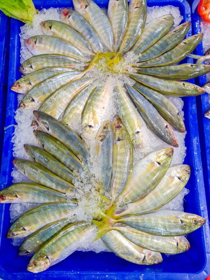 φρέσκος πάγος ψαριών στοκ εικόνες με δικαίωμα ελεύθερης χρήσης
