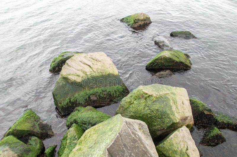 Φρέσκος πράσινος ωκεανός στοκ φωτογραφίες