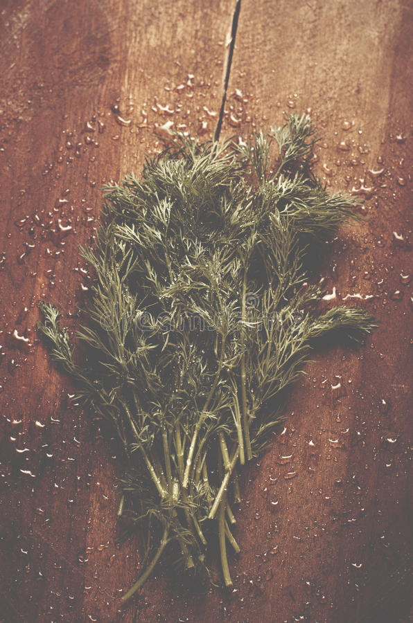 Φρέσκος υγρός άνηθος από τον κήπο στον παλαιό ξύλινο πίνακα BA χορταριών στοκ εικόνα με δικαίωμα ελεύθερης χρήσης