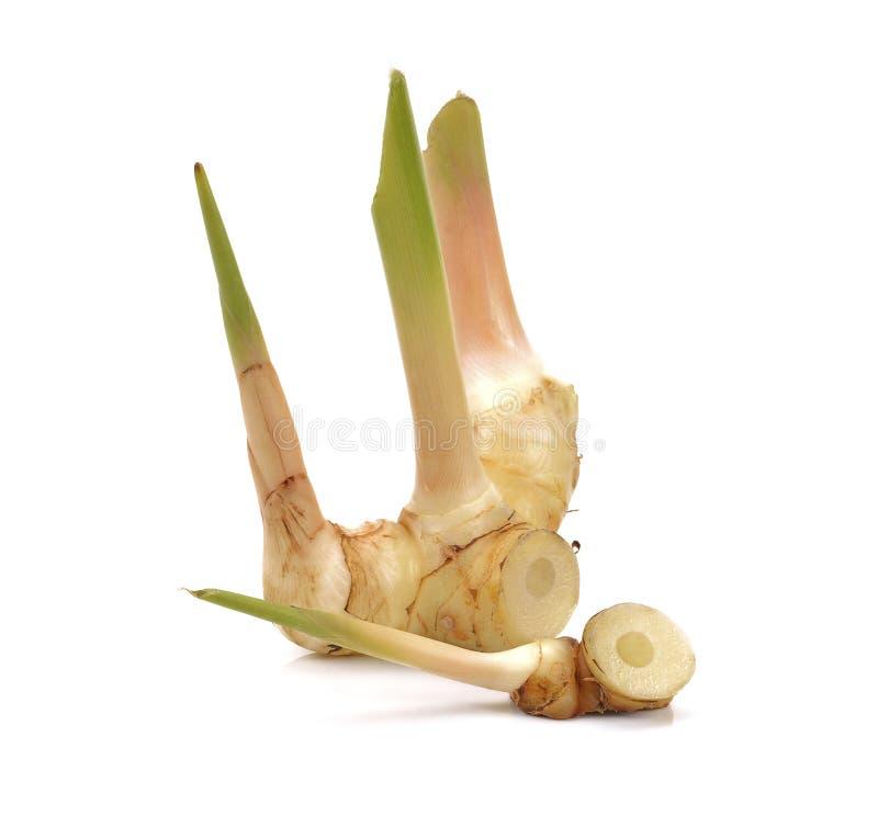 Φρέσκος galangal που απομονώνεται στην άσπρη ανασκόπηση στοκ φωτογραφία με δικαίωμα ελεύθερης χρήσης