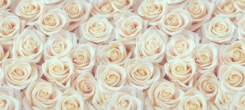 Φρέσκο άσπρο άνευ ραφής σχέδιο τριαντάφυλλων στοκ εικόνα