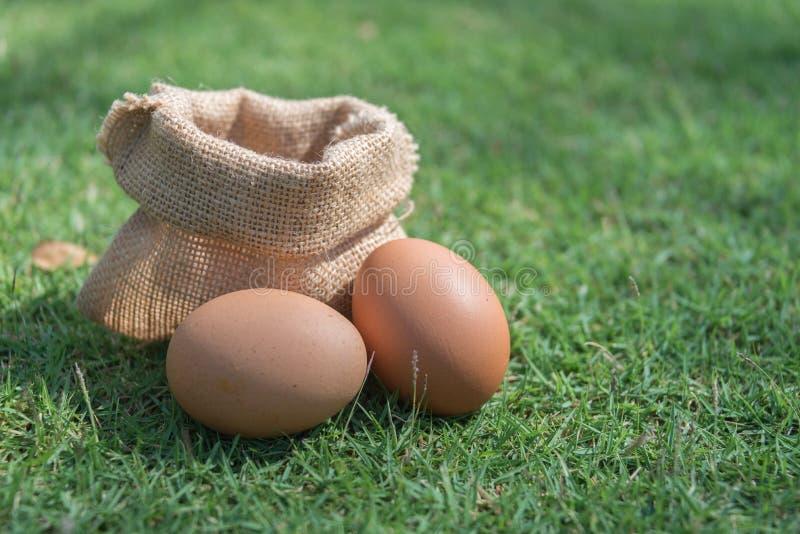 Φρέσκο αυγό σάκων σε μια πράσινη χλόη στοκ εικόνα με δικαίωμα ελεύθερης χρήσης