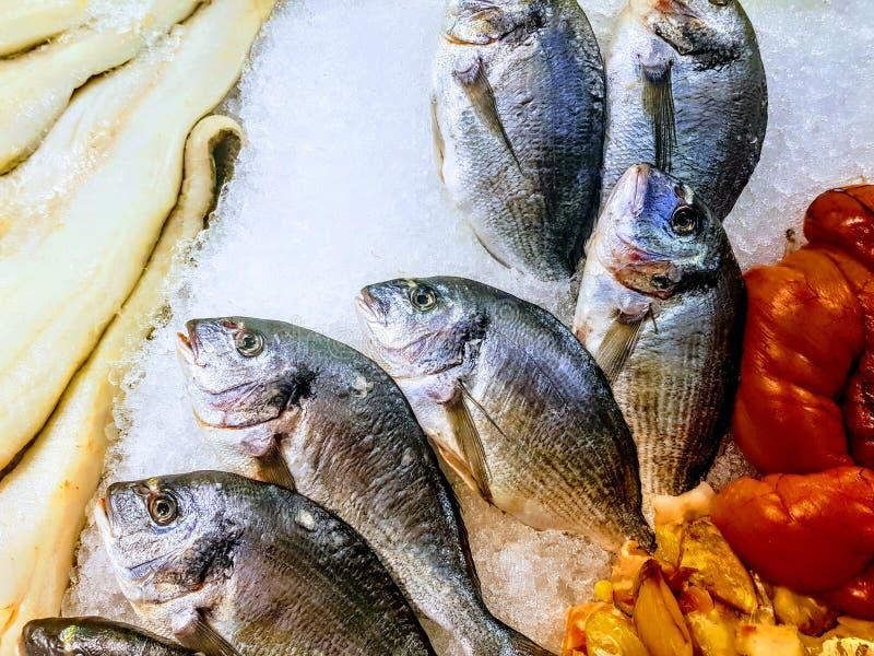 Φρέσκο βραδυνό ψαριών στον πάγο στοκ εικόνες