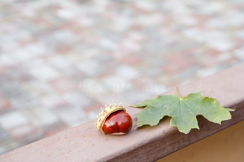 Φρέσκο κάστανο και πράσινο φύλλο στο μεταλλικό φράκτη στοκ εικόνες