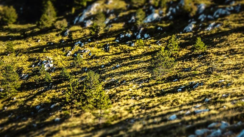 Φρέσκο και πράσινο δάσος σε μια αιχμή μέσα στα βουνά Biokovo σε Makarska, Κροατία στοκ εικόνα