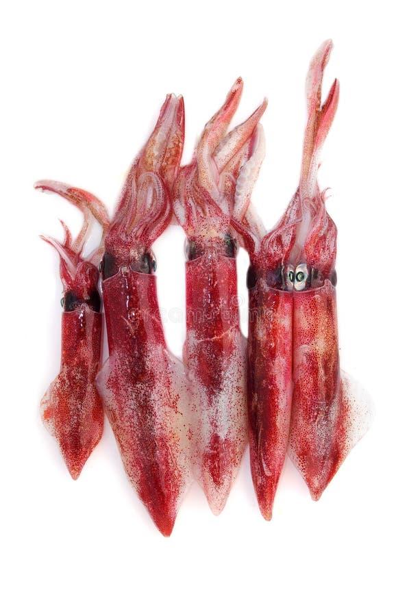 φρέσκο καλαμάρι θαλασσι στοκ φωτογραφία