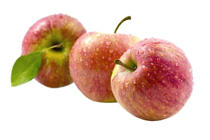 φρέσκο κόκκινο τρία μήλων στοκ εικόνα