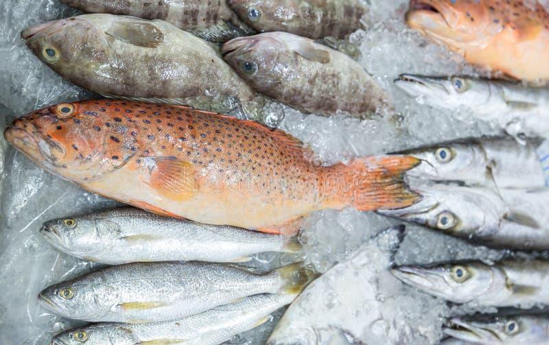 Φρέσκο κόκκινο grouper στον πάγο στην αγορά ψαριών Κόκκινος-ενωμένο grouper r Δοκιμάζοντας θαλασσινά από την Ταϊλάνδη στοκ φωτογραφία