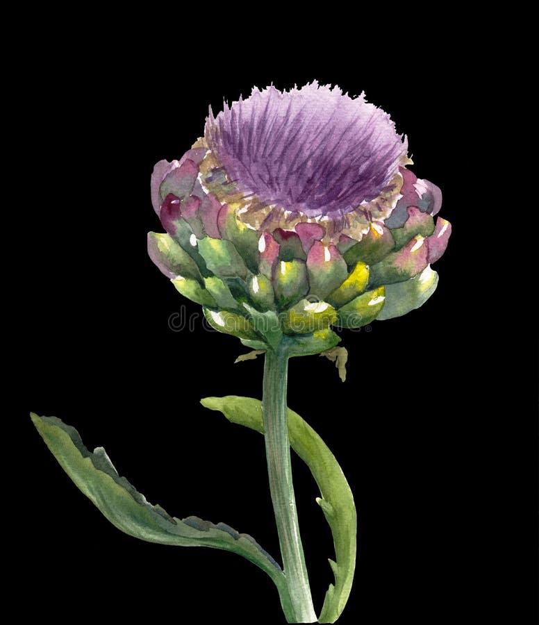 Φρέσκο οργανικό scolymus Cynara λουλουδιών αγκιναρών που απομονώνεται στο μαύρο υπόβαθρο Βοτανική απεικόνιση Watercolor Χορτοφάγο στοκ φωτογραφία με δικαίωμα ελεύθερης χρήσης